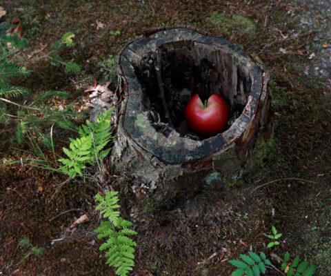 The forgotten apple