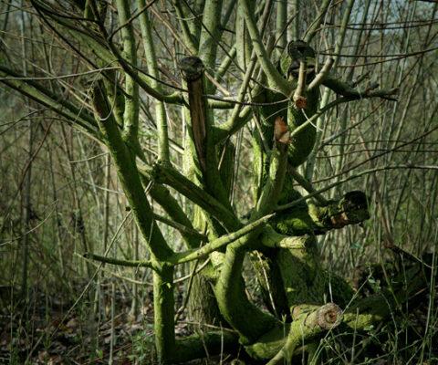 Tree of desires